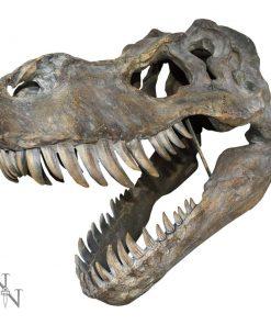 Tyrannosaurus Rex Skull Large 51.5cm B/strap