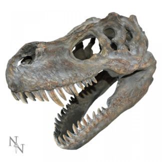 Tyrannosaurus Rex Skull Small 39.5cm B/strap