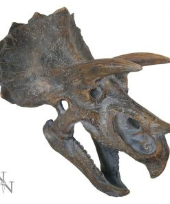 Triceratops Head 23cm