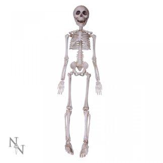 Skeleton 50cm
