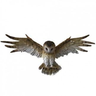 Wisdom Flight 54.5cm